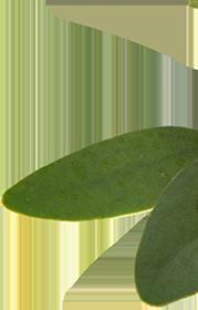 right-leaf